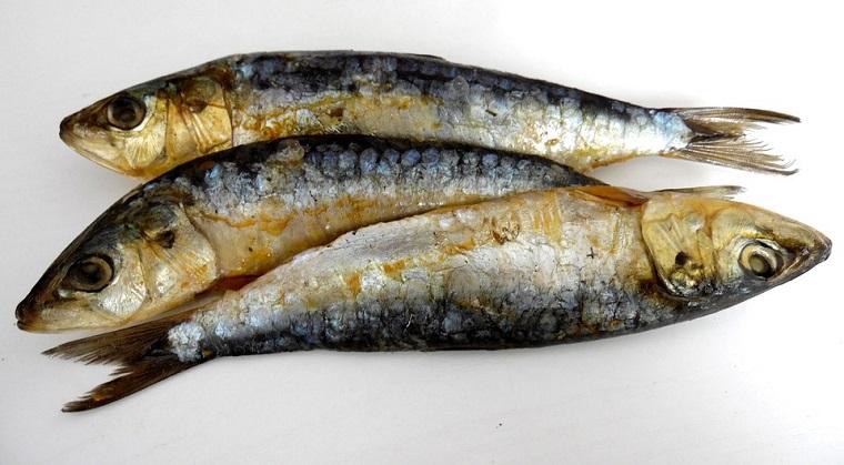 Recetas faciles con sardinas en conserva